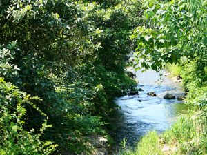 上芳養の川