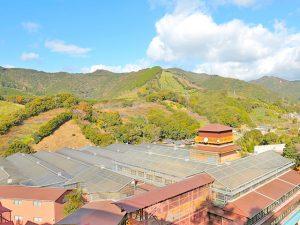 自然の豊かな山間にあるオカハタ梅干工場